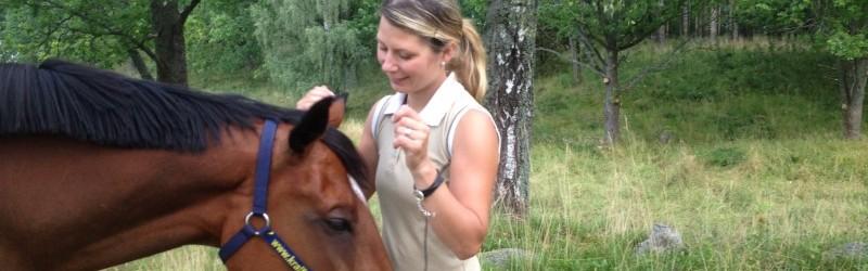 Hur talar du till din häst? Teknik för fysisk kommunikation.