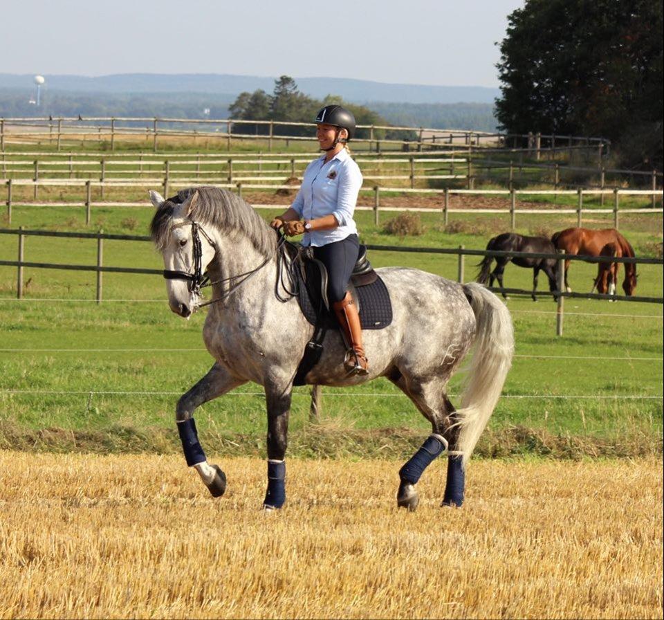 Det är inte hästen som har målen.
